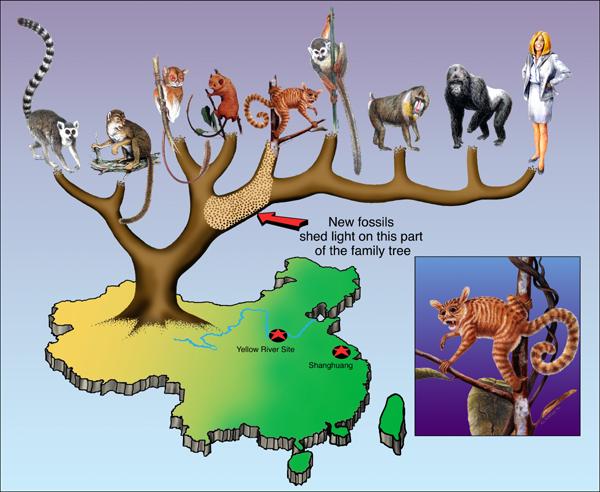 tree of life evolution. Like the Tree